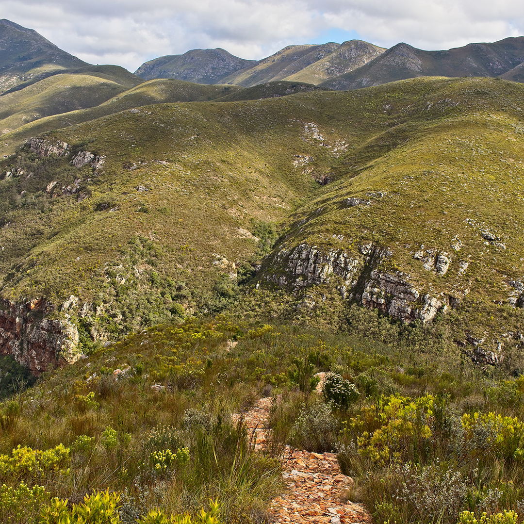 A path through the magnificent Zuurberg mountains in the Eastern Cape.